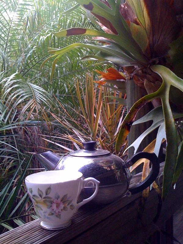 Dream time Tea time