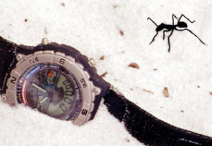 What feelings come up for you as you look at this image? What is the ant thinking? What is the watch feeling?