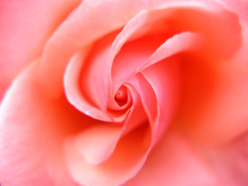 Rose gold alchemy