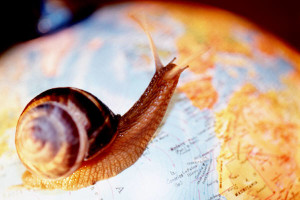 Dream Interpretation Snail | RM.
