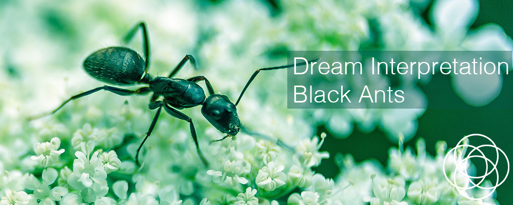 Dream Interpretation Black Ants Jane Teresa Anderson