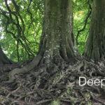 Deep Roots Jane Teresa Anderson Dreams