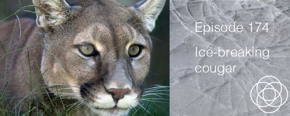 Episode 174 the dream show ice breaking cougar in your for What does it mean to dream about fish